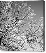 Tree Art Canvas Print