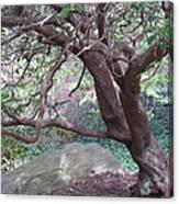 Tree At Boat House Canvas Print
