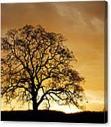 Tree At Golden Sunrise Canvas Print