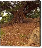 Tree At Royal Botanic Garden Canvas Print