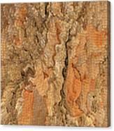 Tree Bark Abstract Canvas Print