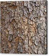 Tree Bark Background Texture Canvas Print