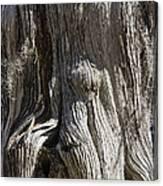 Tree Bark No. 3 Canvas Print