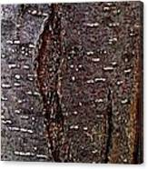Tree Bark To The Left Canvas Print