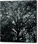 Tree Black And White Canvas Print