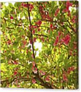 Tree Blossom 1 Canvas Print
