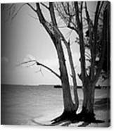 Tree By The Sea Canvas Print