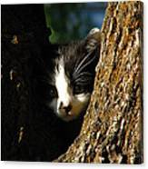 Tree Cat Canvas Print
