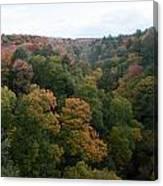 Tree Color Canvas Print