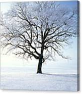 Tree Covered In Hoar Frost Canvas Print