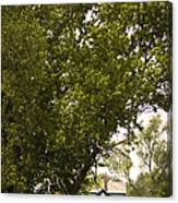 Tree Covered Canvas Print