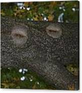 Tree Face 1 Canvas Print