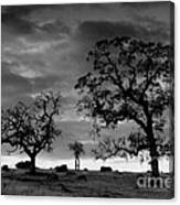 Tree Family In Black And White Canvas Print