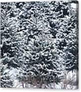Tree Farm #3 Canvas Print
