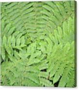 Tree Fern (ponga Canvas Print