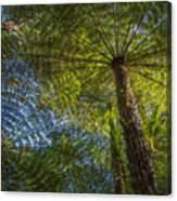 Tree Ferns From Below Canvas Print