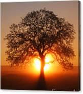 Tree Fog Sunrise Canvas Print