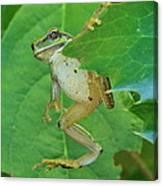 Tree Frog And Mahonia. Canvas Print