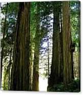 Tree Giants Canvas Print
