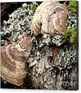 Tree Growths Canvas Print