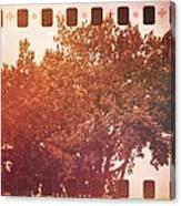 Tree Grunge Vintage Analog Film Canvas Print