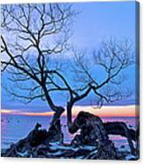 Tree Hanging Over Lake - Photographers Collection Canvas Print
