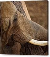 Tree Hugging Elephant Canvas Print