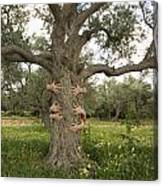 Tree Hugging Green Ecological Concept  Canvas Print