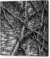 Tree Hugging Canvas Print