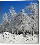 Tree Ice Canvas Print