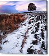Tree In A Field  Canvas Print