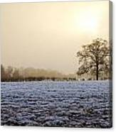 Tree In A Field On A Snowy Day Canvas Print