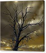 Tree In A Storm Canvas Print