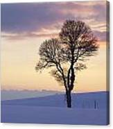 Tree In A Winter Landscape In The Evening Canvas Print