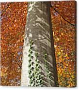 Tree In Autumn Canvas Print