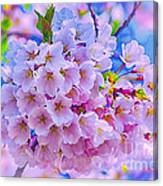 Tree In Bloom Canvas Print