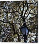 Tree In French Quarter Canvas Print