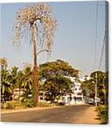 Tree In Goa Canvas Print