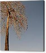 Tree In India Canvas Print