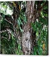 Tree In Kauai Canvas Print