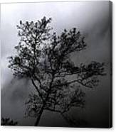 Tree In Mist Canvas Print
