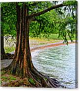 Tree In Paradise Canvas Print