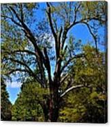 Tree In Rock Hill Canvas Print