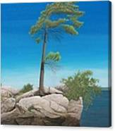 Tree In Rock Canvas Print
