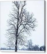 Tree In Snow Canvas Print