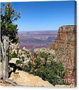 Tree In The Grand Canyon Canvas Print