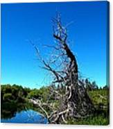 Tree In The Marsh Canvas Print
