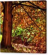 Tree In The Park. De Haar Castle. Utrecht  Canvas Print