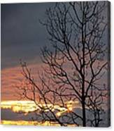Tree In The Setting Sun Canvas Print