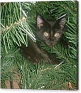 Tree Kitten Canvas Print